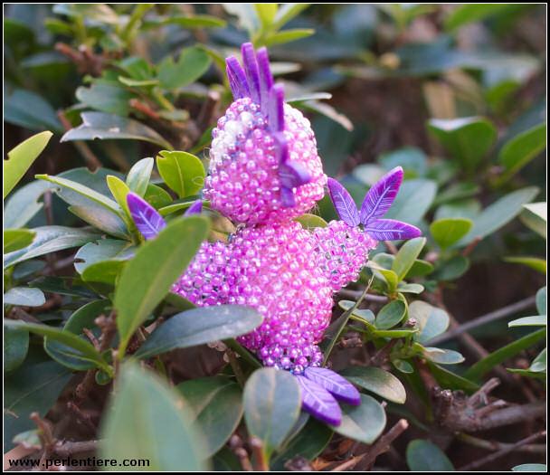 vogel violette flügel